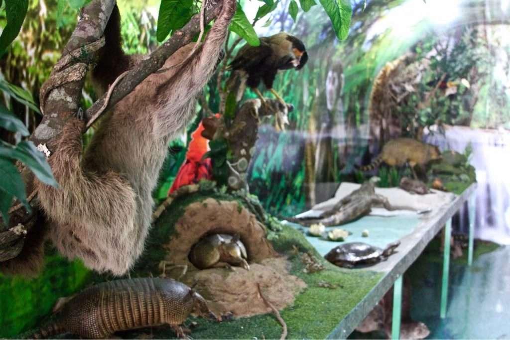 Museu itinerante que retrata a Amazônia 2
