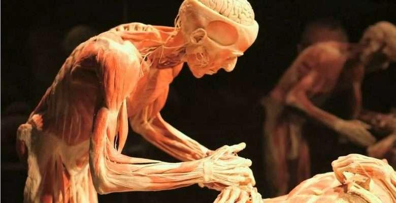 Montevidéu recebe exposição de múmias 1