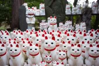 Mais de 10 mil 'gatos da sorte' decoram templo no Japão-media-1 1