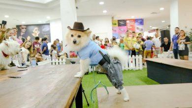 Evento pet cãocurso e desfile de cães neste final de semana