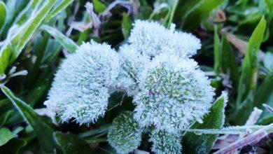 Temperaturas despencam em Santa Catarina – Invernão a vista