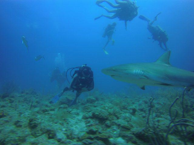 Fábio Ramalho: explorando as profundezas do Caribe em Providência. Foto divulgação.