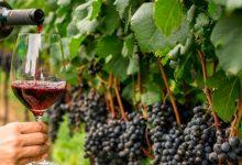 Pró-Vinho fomenta o consumo de vinho no Brasil com promoções exclusivas envolvendo restaurantes e distribuidoras 3