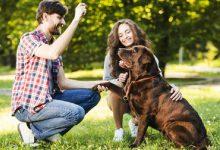 Desequilíbrio Energético E O Mal Comportamento Dos Animais