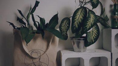 Eco-friendly: a renovação da moda a partir da consciência 3