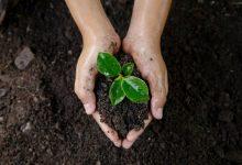 Floripa Shopping promove ações em comemoração ao Dia do Meio Ambiente 6