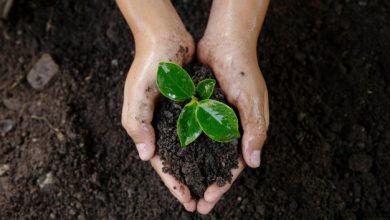 Floripa Shopping promove ações em comemoração ao Dia do Meio Ambiente 3
