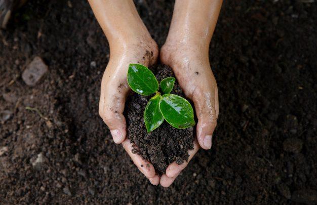 Floripa Shopping promove ações em comemoração ao Dia do Meio Ambiente 1