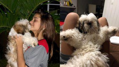 A atriz Myrella Victória e seu novo Pet! 9