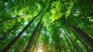 Semana do Meio Ambiente terá atividades em Balneário Camboriú e Camboriú nesta semana 4