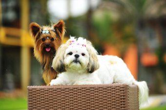 Pousada Estaleiro Guest House é pet lovers